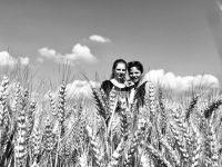 Bővebben: Folyik az aratás...