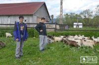 Bővebben: Kecskéket bíztak Böjte atya neveltjeire