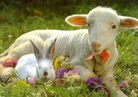 Bővebben: Kellemes Húsvéti Ünnepet!