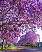 Bővebben: Sok szép növény él itt Ausztráliában!