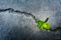 Bővebben: Isten útja….kihívás lehet