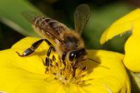 Bővebben: Méhészkedés
