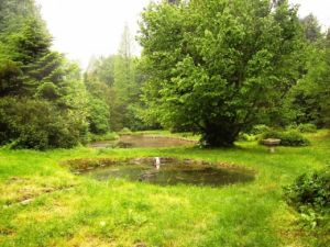 b_300_300_16777215_00_images_stories_Szep_Termeszet_arboretum-Piski-6-l.jpg