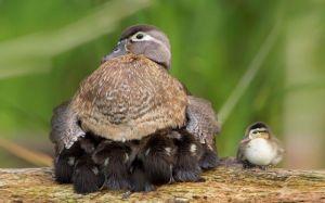 b_300_300_16777215_00_images_stories_Szep_Termeszet_cute-bird-parents-34__700.jpg