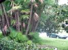 Floridai képek.