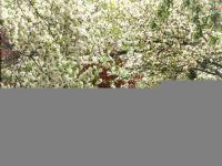 Bővebben: Májusi hideg a fagyosszentek puttonyában