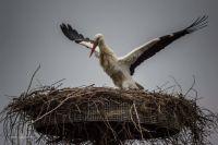 Bővebben: Megérkezett az első gólya a Kárpát-medencébe!