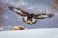 Bővebben: Állatok télen – egy udvarhelyi természetfotós szemével