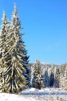 Bővebben: A hosszú téli estéken érdemes elolvasni