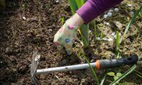 Bővebben: Nincs jobb orvosság a kertészkedésnél