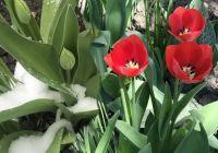 Bővebben: Ilyen kemény virágaink vannak nekünk itt Déván!!