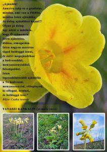 b_300_300_16777215_00_images_stories_Szep_Termeszet_2012_14_heti-uzenet-k.jpg