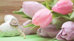 b_300_300_16777215_00_images_stories_Szep_tulipanok19.jpg