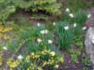 A dévai kolostor virágai