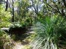Trópusi erdőben