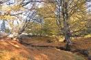 Fent a Hargitán őszel
