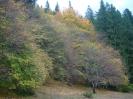Kovásznai ősz