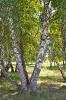 Rétyi Természetvédelmi terület