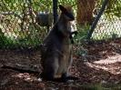 Sydney-i állatkertben
