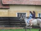 Székely ló