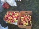 Zöldség és gyümölcs adomány Csomafalván