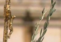 Bővebben: XVI. Benedek pápa virágvasárnapi tanítása