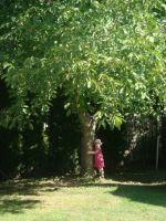 Bővebben: A Szentatya diófa palántákat áldott meg az általános kihallgatáson