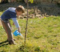 Bővebben: Csaba testvér fát ültet gyermekeivel