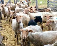 Bővebben: Jó pásztorokért imádkozunk!