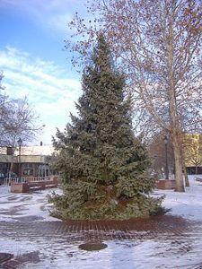 b_300_300_16777215_00_images_stories_Igaz_Tarsadalom_250px-christmas_tree.jpg